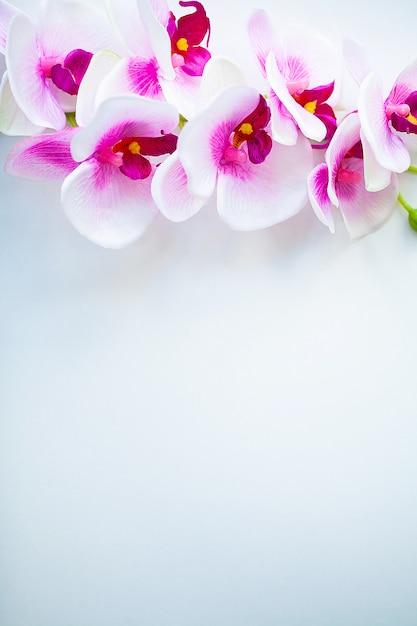 Spa e bem-estar cena. flor da orquídea no fundo pastel de madeira com copyspace Foto Premium