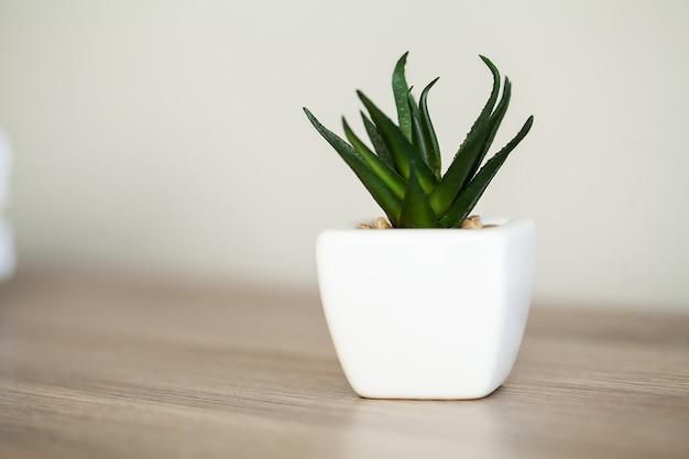 Spa. planta suculenta na borda da janela no banheiro moderno Foto Premium