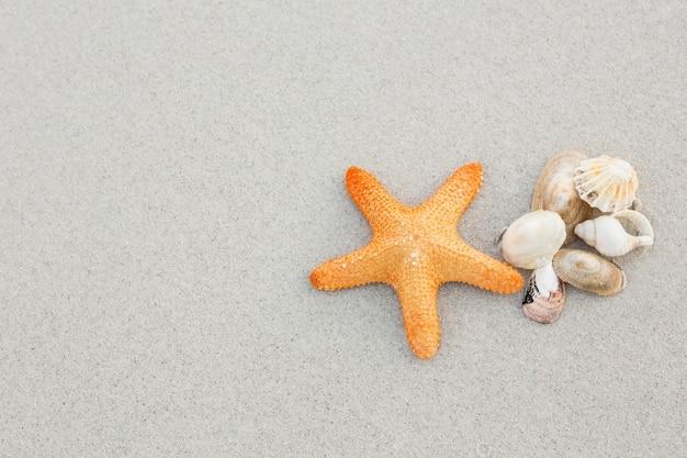 Starfish e escudos na areia Foto gratuita