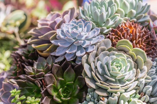 Succulents ou cacto no jardim botânico do deserto para o projeto da decoração e da agricultura. Foto Premium