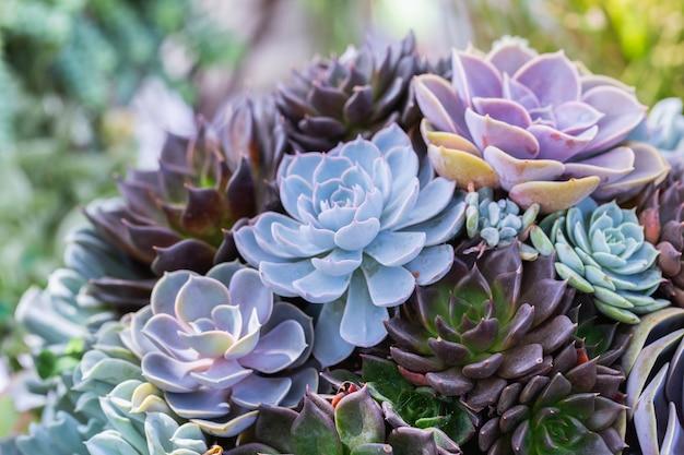 Suculentas ou cactos no jardim botânico do deserto Foto Premium