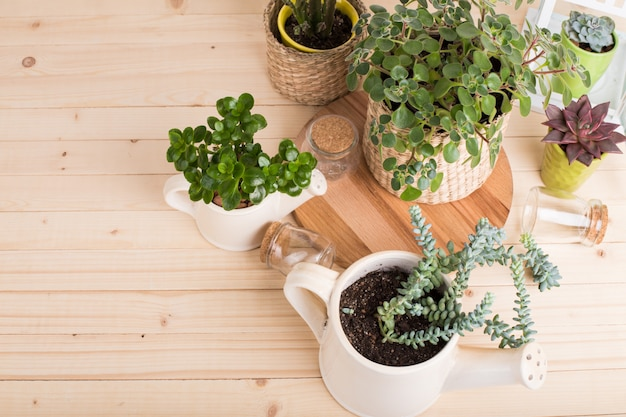 Suculentas, plantas em vasos Foto Premium