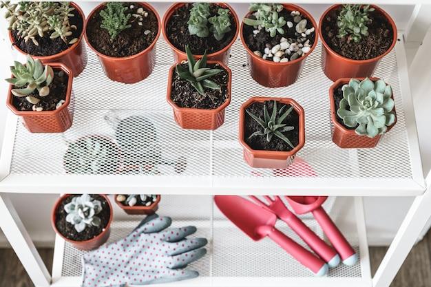 Suculentos. plantas de casa pequena em vaso Foto Premium