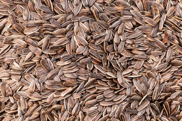 Superfície de sementes de girassol de vista superior Foto gratuita
