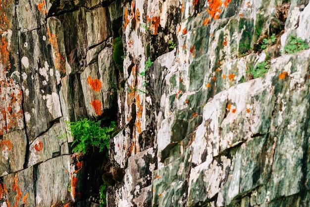 Superfície em camadas rochosa laranja musgosa da montanha com rica vegetação das terras altas. Foto Premium