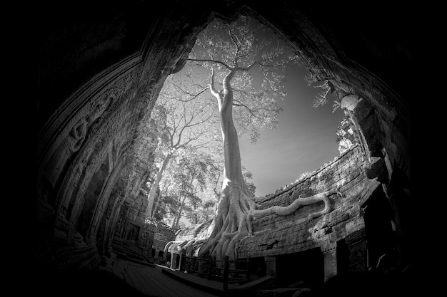 Ta prohm castle na província de siem reap, camboja. Foto Premium