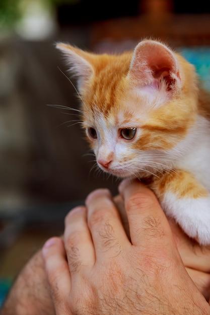 Tabby gatinho nas mãos de um homem Foto Premium