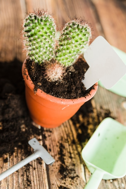 Tag em branco dentro do cacto planta em vaso na mesa de madeira Foto gratuita