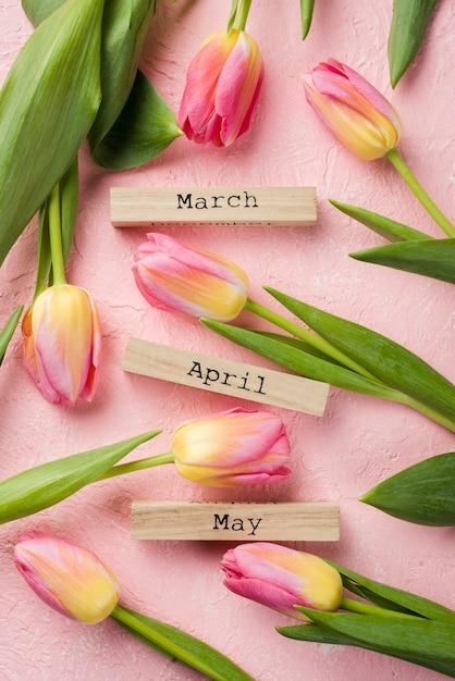 Tags de meses de primavera vista superior com tulipas ao lado Foto gratuita