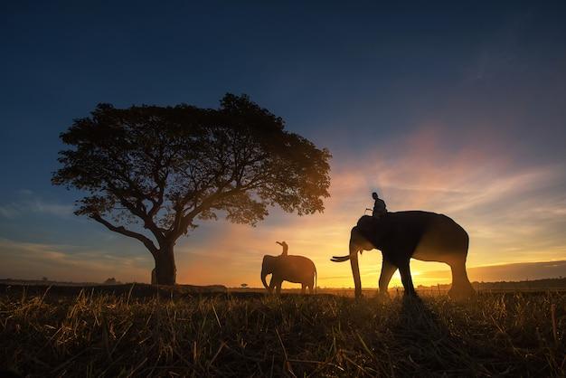 Tailândia campo; elefante de silhueta no fundo do pôr do sol Foto Premium