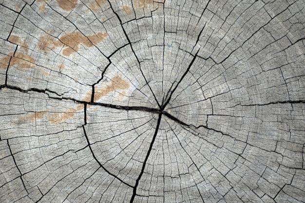 Taxture de madeira blackground Foto Premium