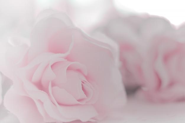 Tecido de flores rosas coloridas feito com gradiente de fundo e cartão postal Foto Premium
