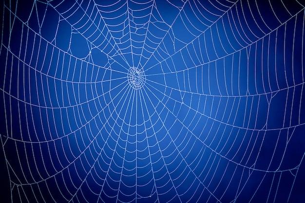 Teia de aranha azul. conceito de comunicação global. Foto Premium
