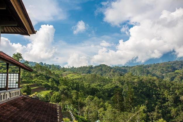 Telhado do edifício na densa selva verde Foto Premium