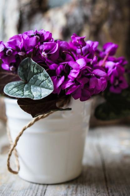 Tempo de primavera com flores de ciclâmen na superfície rústica Foto Premium