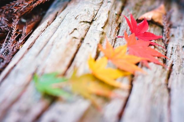 Temporada de outono colorida de árvore e folhas Foto Premium