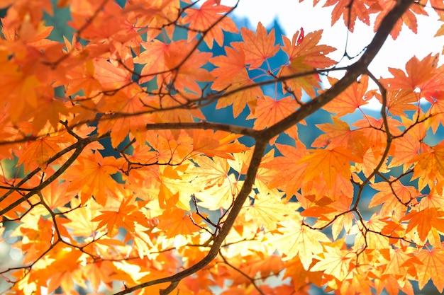 Temporada de outono de árvore e folhas Foto Premium