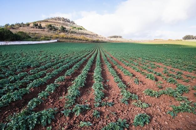 Terra agrícola e céu nublado Foto Premium