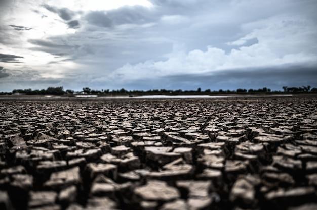 Terra árida com solo seco e rachado Foto gratuita