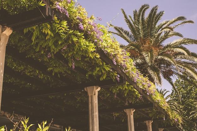 Terraço no telhado de um restaurante europeu com palmeiras contra o céu Foto Premium