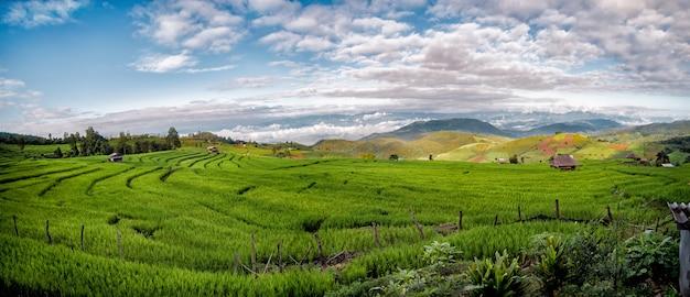 Terraços do arroz do pa bong piang em chiang mai, tailândia, vista panorâmico Foto Premium