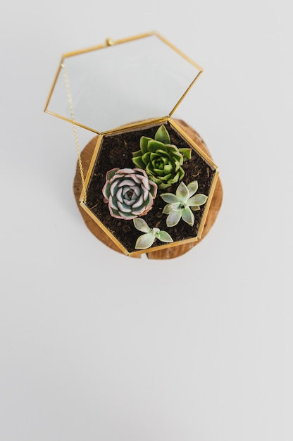 Terrário de plantas suculentas Foto Premium