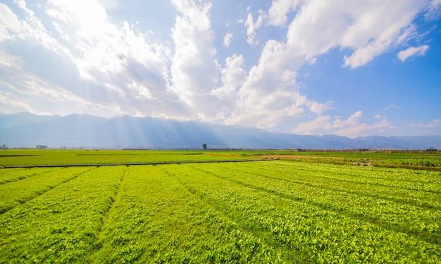 Terras agrícolas Foto gratuita