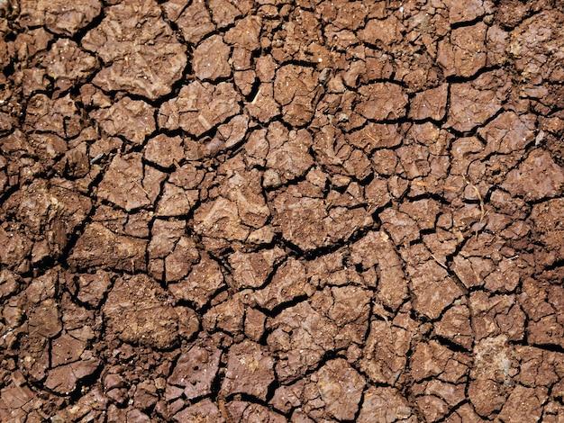 Terras secas e rachadas Foto gratuita