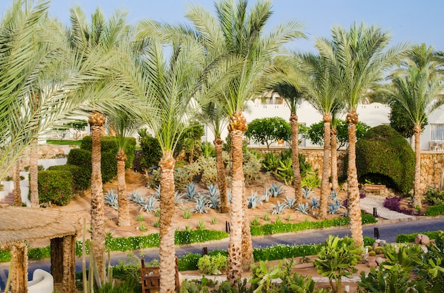 Território bem cuidado do parque do hotel de cinco estrelas em sharm el sheikh. Foto Premium