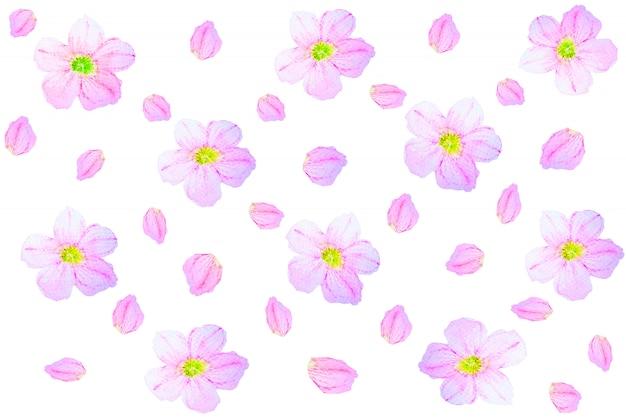 Teste padrão floral da aquarela sem emenda em um fundo branco. Foto Premium