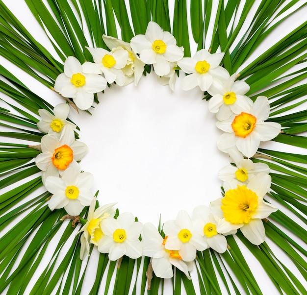 Teste padrão floral, frame redondo de flores de narciso em um de folhas verdes Foto Premium