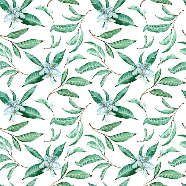 Teste padrão sem emenda de flores e de folhas da tangerina no fundo branco. aquarela fundo tropical. Foto Premium