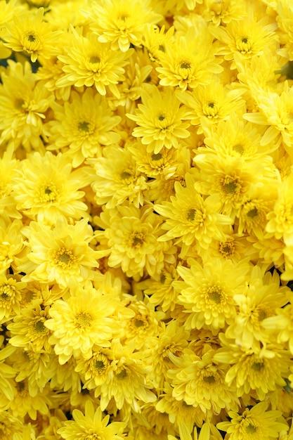 Textura abstrata de crisântemo amarelo esvoaçante Foto gratuita