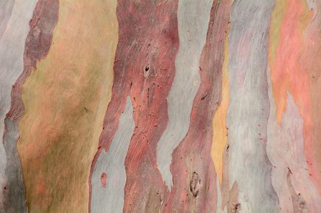 Textura abstrata padrão colorido de casca de árvore de eucalipto Foto Premium