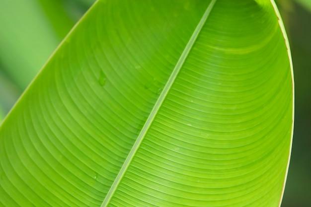 Textura brilhante de folha verde com gotas de água Foto Premium