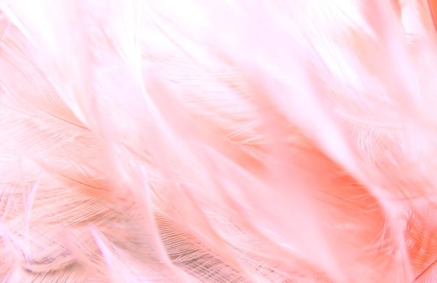 Textura cor-de-rosa das penas como o fundo. Foto Premium