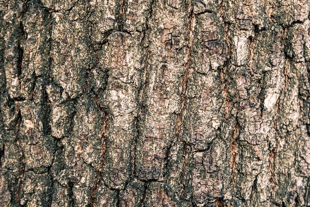 Textura da casca de uma árvore de carvalho Foto Premium