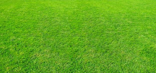 Textura da grama verde de um campo. Foto Premium