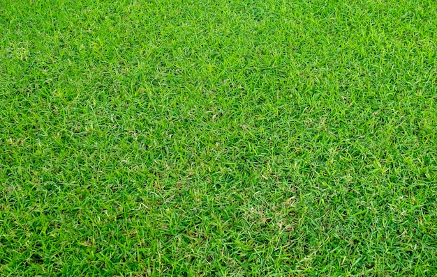 Textura da grama verde para o fundo. teste padrão do gramado e fundo verdes da textura. Foto Premium
