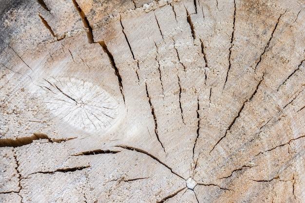 Textura de árvore de fundo Foto Premium