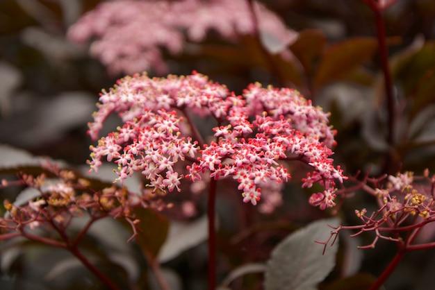 Textura de árvore linda folha vermelha com flores desabrochando Foto Premium