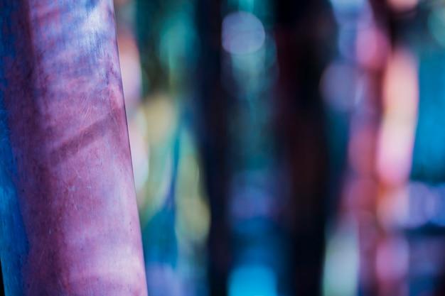Textura de bambu Foto gratuita