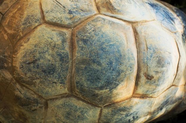 Textura de carapaça de tartaruga. Foto Premium