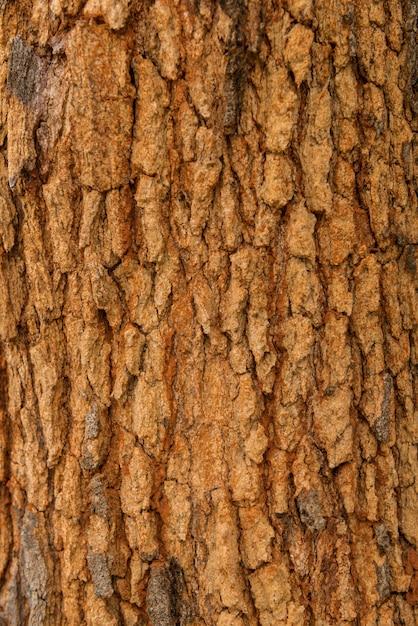 Textura de casca de árvore. pele a casca de uma árvore que traça rachaduras Foto Premium