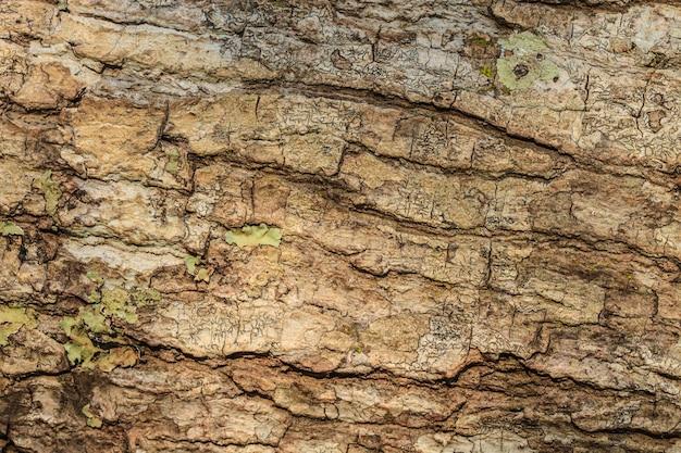 Textura de casca de árvore Foto Premium