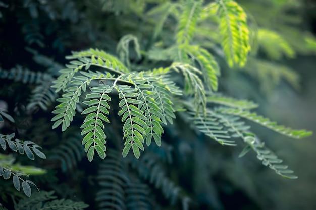 Textura de folha tropical verde abstrata, fundo de tom escuro da natureza, folha tropical Foto Premium