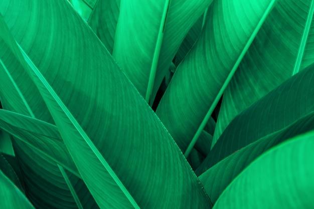 Textura de folha verde tropical, natureza de fundo de folhas verdes pano de fundo verde escuro, conceito de natureza e planta tropical Foto Premium