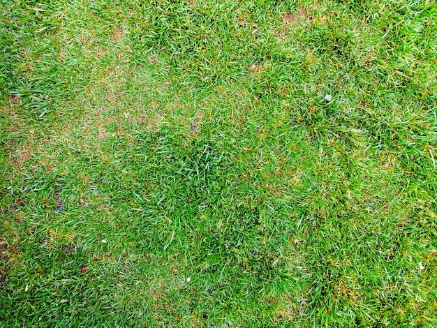 Textura de fundo de grama Foto gratuita