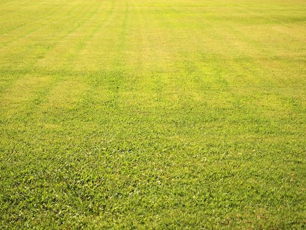 Textura de fundo sem emenda de campo de grama verde Foto Premium