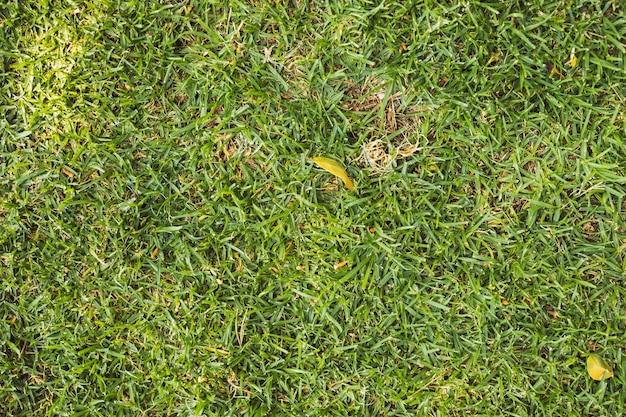 Textura de grama verde brilhante Foto gratuita